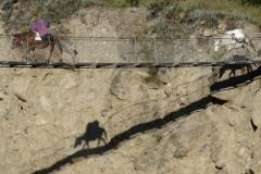 Nepal-Esel