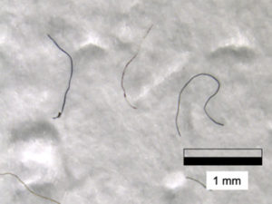 Microplastic fibers in the snow